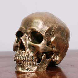 Human Bronze Resin Skull Model Medical Halloween Realistic 1:1  One Size