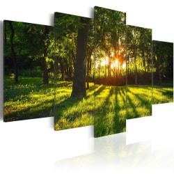 Tavla - The forest reflection Size: 200x100