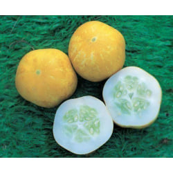 Gurka Crystal Lemon 5 st frön