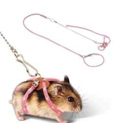 Koppel Hamster Hamsterkoppel Rosa Rosa