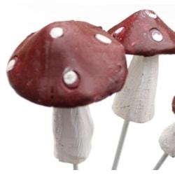 Flugsvamp röd och vit 6-7 cm vit , röd