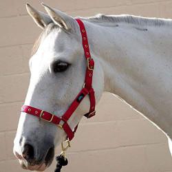 Hy Holly helt justerbar huvudkrage Pony Röd