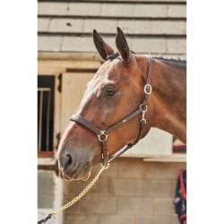 John Whitaker Ready to Ride Leather Headcollar Pony Brun