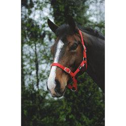 Saxon Ekonomisk huvudkollar Small Pony Röd