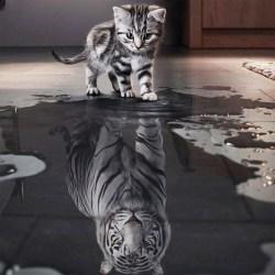5D Diamond Painting Kitty and Tiger Home Art Decor Kit DIY