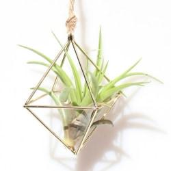 Hanging Tillandsia Air Plants Rack Metal Art Flower Planter Pot J1