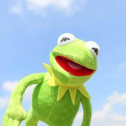 40cm Kermit The Frog Sesame Street Muppet ONE ITEM Full Body Dol one size
