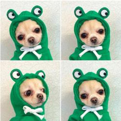 höst vinter Pet Christmas Dog Cat söt frukt fleece tröja