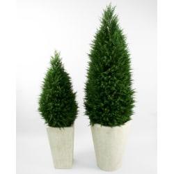 Cypressus (Cypress) - 190cm