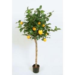 Lemon Tree (Citron Träd) - 140cm