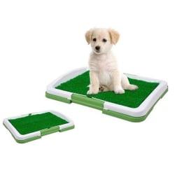 Kissmatta för Hund - Träna valpen att bli rumsren