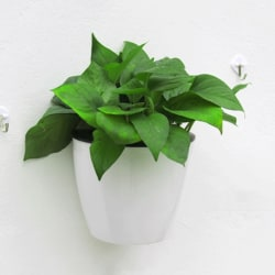 Self Watering Pot Automatic Plant Flower Pot Hanging Plastic Wa White L
