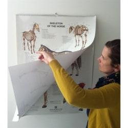 Häst plansch i flip over format 60x80 cm