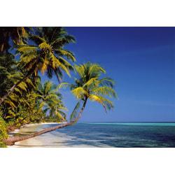 Fototapet - Beach