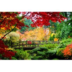 Fototapet Bridge in Japanese Garden