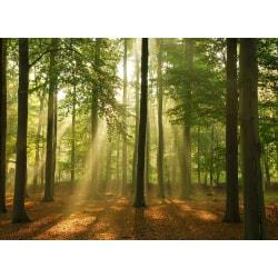 Fototapet Förtrollad skog  250x186cm