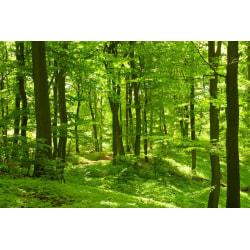 Fototapet Grönskande skog 400x260cm