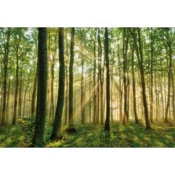 Mini fototapet - Skog i morgonljus