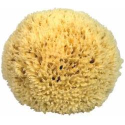 Sponge from The Mediterranean, Premium Anti, Size 9 cm