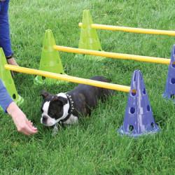 FitPAWS Agilityset för hundar Canine Gym Flerfärgsdesign
