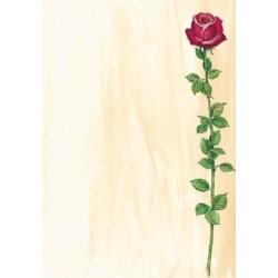 Motivpapper Sigel Rose Bloom DP695 A4 90gram, 25 ark/fp multifärg