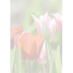 Motivpapper Sigel Spring Fever DP462 A4 90gram, 25 ark/fp multifärg