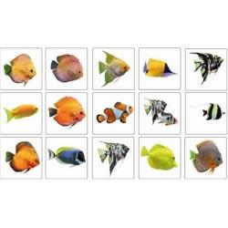 Färgsprakande fiskar Kakeldekor