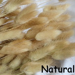50pcs/Bunch Rabbit Tail Grass Bunny Tails Dried Flowers