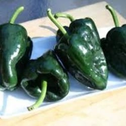 """Chili """"Ancho Grande"""" 8 frön"""
