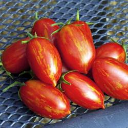 Tomat Firecracker F1  7  frö