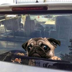 Funny 3D Pug Dogs Watch Snail Car Window Decal Cute Pet Puppy La One Size
