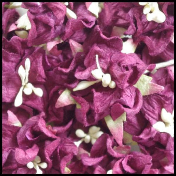 25 gardenior burgundi - 3 cm