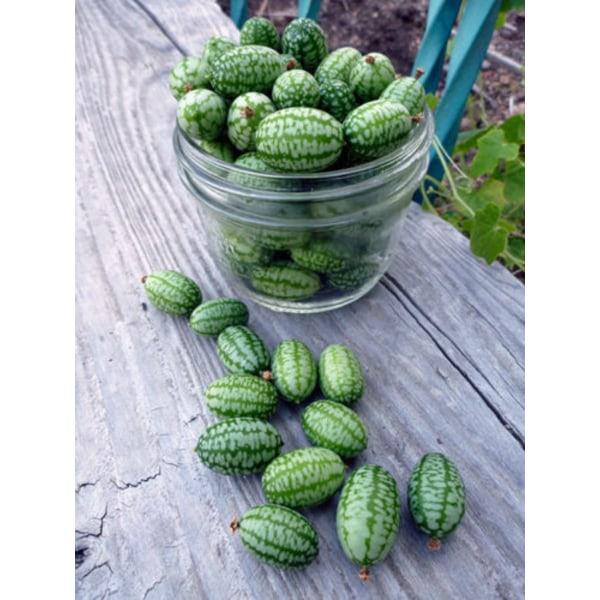 Cucamelon/Djungelgurka 20 st frön gurka/melon hybrid
