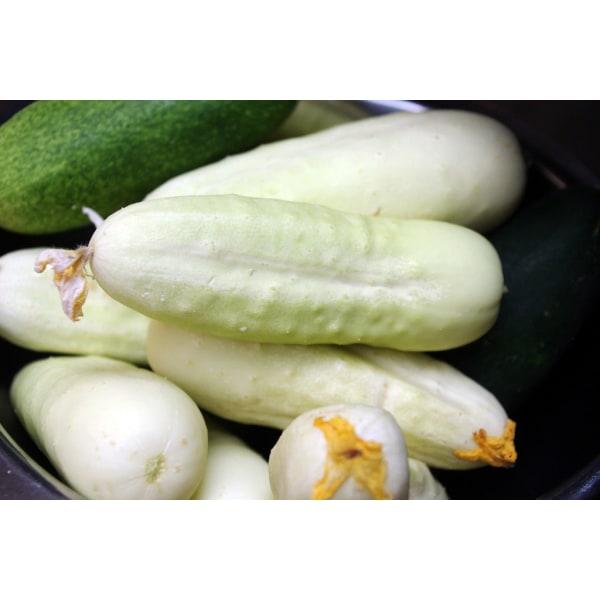 Vit Slanggurka ´White Wonder´ 5 st frön Vit