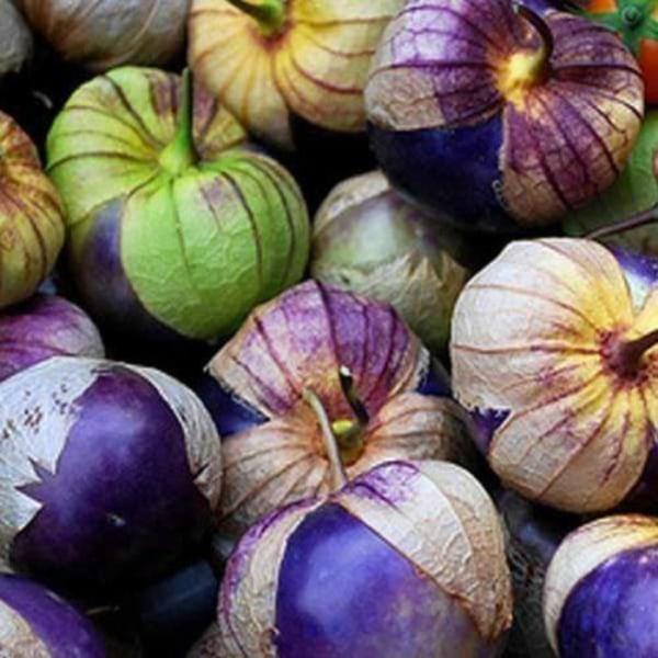 Tomatillo Purple 10 st frön