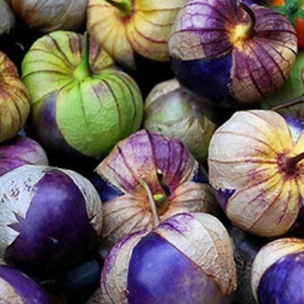 Tomatillo Purple 5 st frön