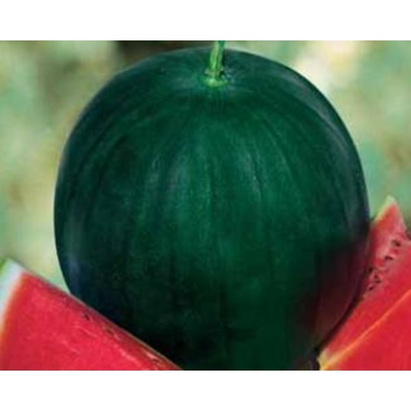 Vattenmelon ´Sugar Baby´ 20 st frön Grön