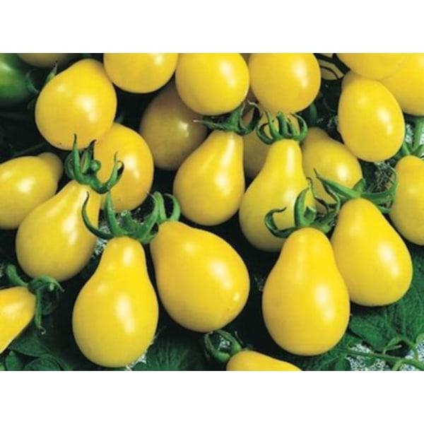 Tomat Yellow Pear 5 st frön