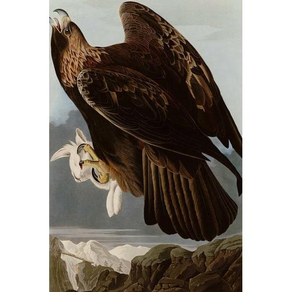 Golden Eagle,John James Audubon,60x40cm