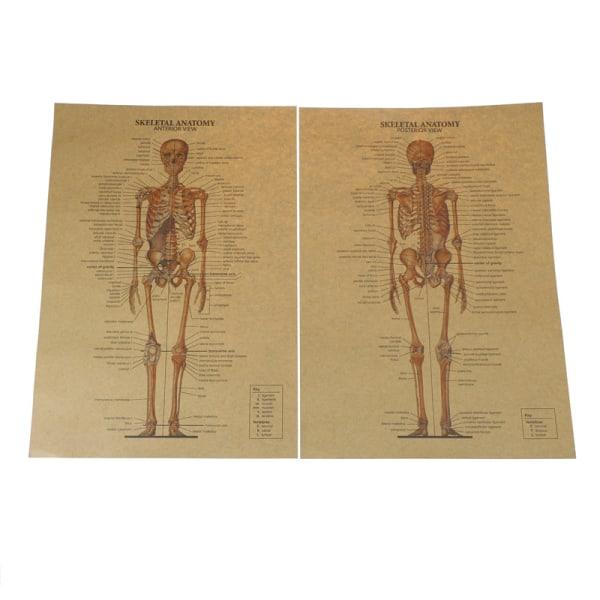 skeletal anatomy poster bar home decor retro kraft paper painti