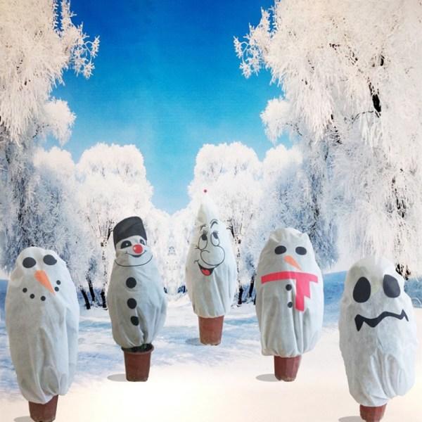 1st Julgransskyddande täckväxt kalltålig Festi