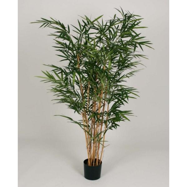 Royal Bamboo Tree - 140cm