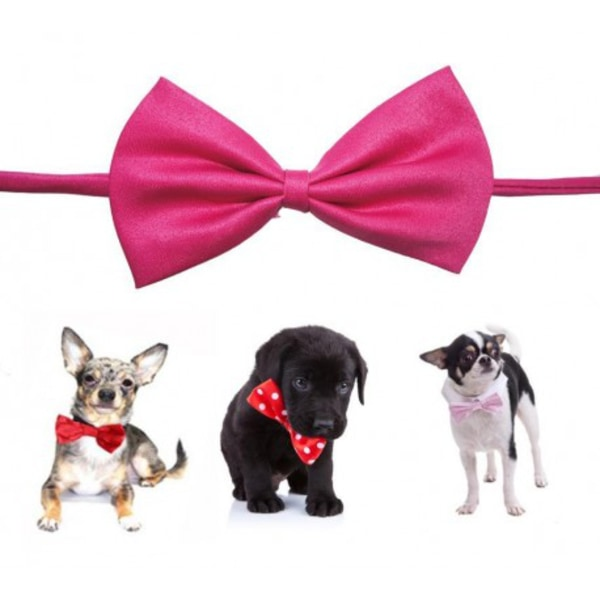 Fluga till hund rosa