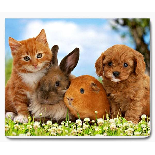 Hund kanin marsvin katt 1 musmatta