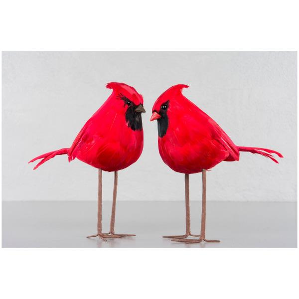 Fågel Cardinal Röd