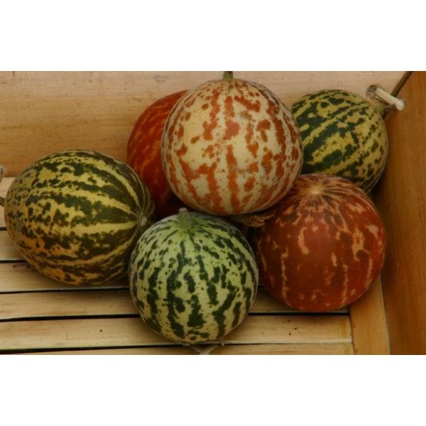 Mangomelon Queen Annes Pocket  15 frön