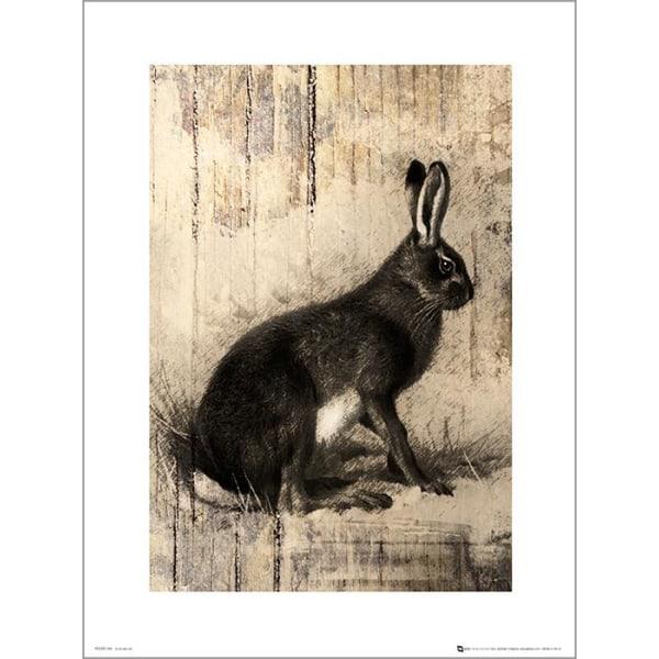 Exklusivt Art Print - Hare Sketch multifärg