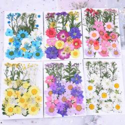 Pressade blommor Små torkade blommor Scrapbooking torr DIY Preser Yellow