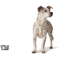 2x Rostfritt stål matskål, för hundar och katter 550 ml