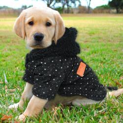 Söt husdjur hund vinter varm fleece hoodie tröja mjuk rock